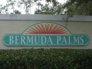 Bermuda Palms